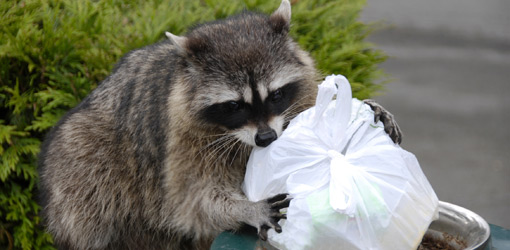 Sioux Falls Wildlife Removal